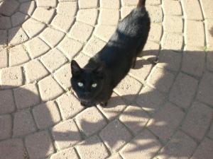 Katze Tana ständig hinter einem her.Vielleicht gibt es ja was zum naschen?